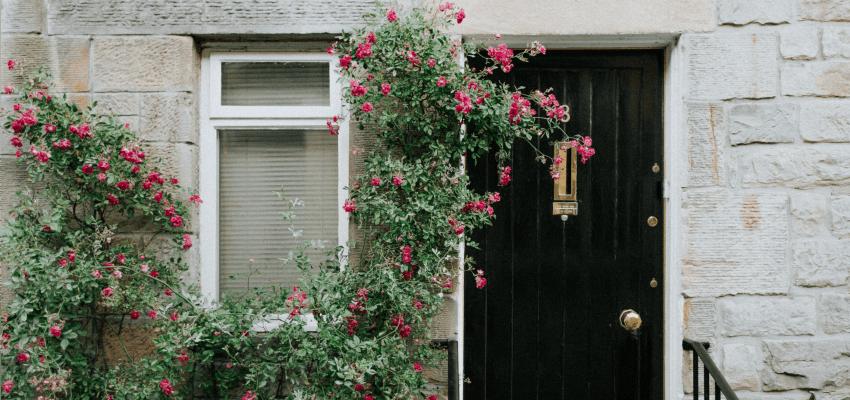 Jak ciąć róże pnące? Kiedy i jak ciąć róże pnące?