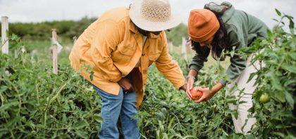 Zabijanie chwastów nietoksyczne herbicydy