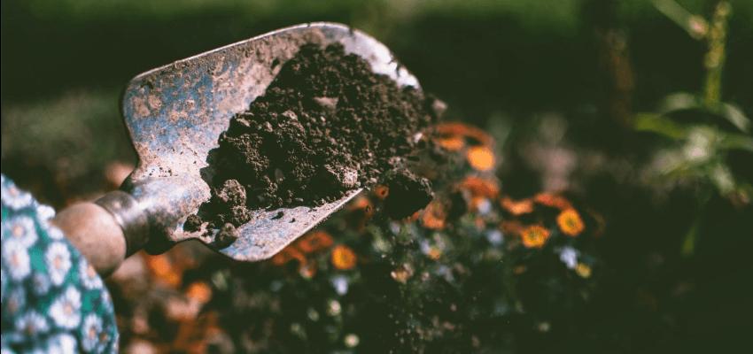 Słonecznica roślina niewielkich rozmiarów