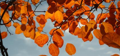 Jak przygotować ogród na jesień?