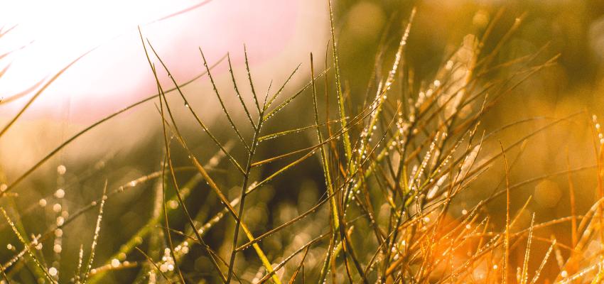 Pospolite chwasty w ogrodzie i rodzaje chwastów w ogrodzie